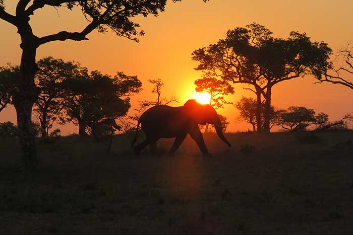 Backroads South Africa & Botswana Family Multisport Adventure Tour