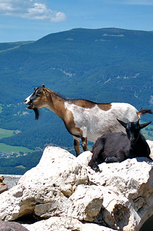 Goats on Backroads Dolomites Multi-Adventure Tour