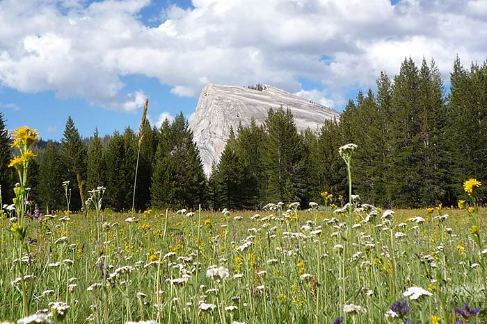 Wildflowers - Backroads Yosemite Family Multi-Adventure Tour