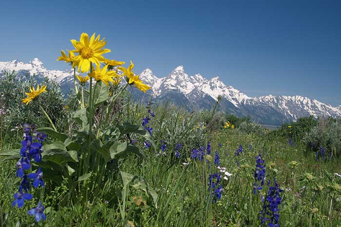 Yellowstone & Grand Teton Adventure Trips