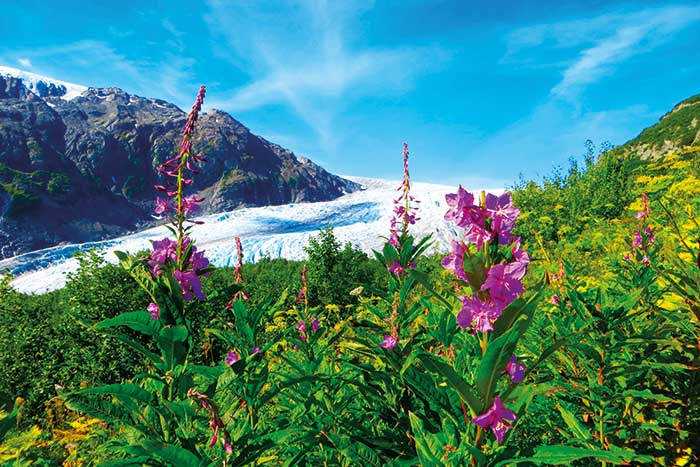 Backroads Alaska Family Walking & Hiking Tours