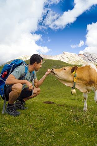Horse - The Dolomites, Italy
