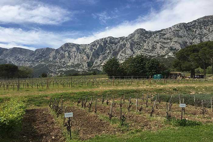 Vineyard - Provence & French Riviera Walking & Hiking Tour