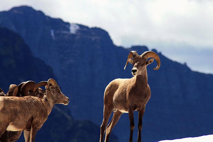 Glacier National Park, Montana Tours
