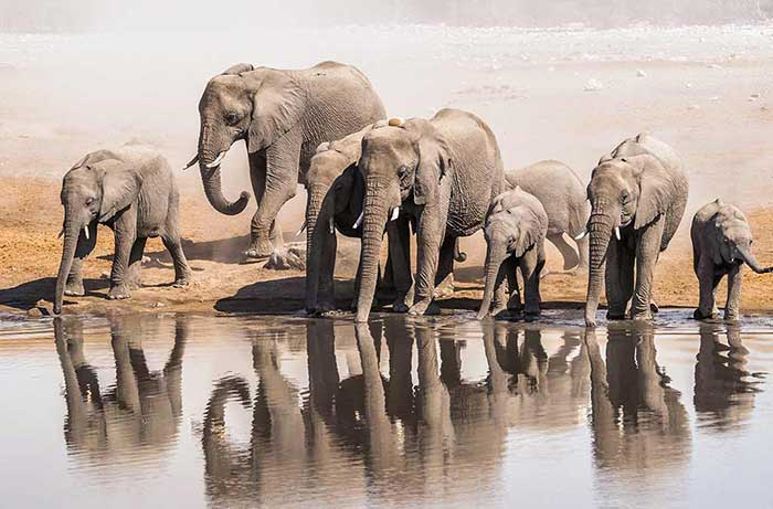 Elephants - Namibia & Zimbabwe Safari