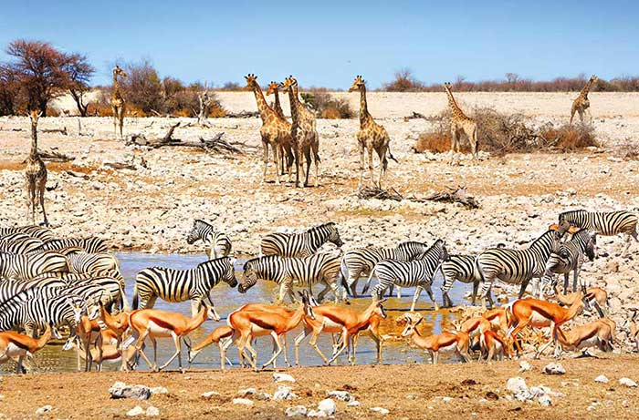 Namibia & Zimbabwe Safari Walking Tour