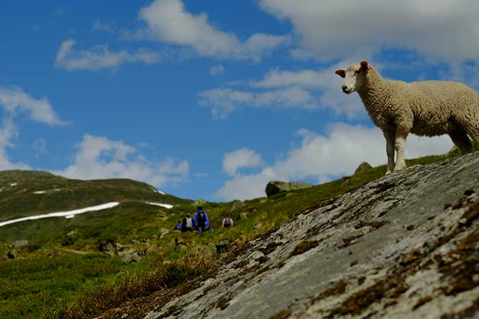 Backroads Norway Family Breakaway Walking and Hiking Tours
