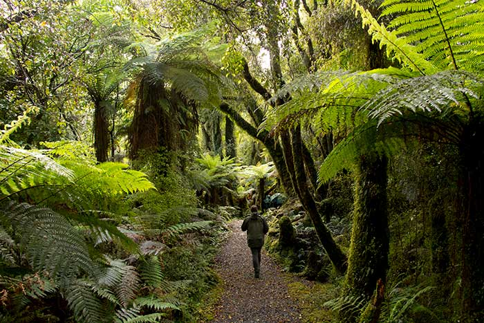 New Zealand Family Walking & Hiking Tour