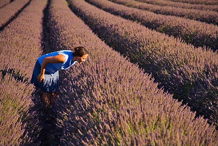 Walking in Lavender fields - Provence & Costa Brava Walking Tours