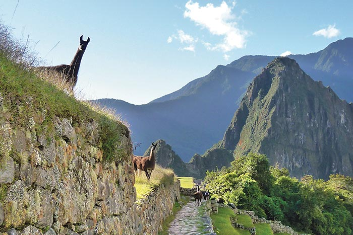 Horses - Peru Lodge-to-Lodge Trekking Tour