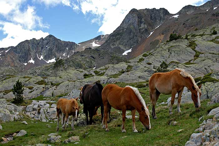 Horses - Backroads Spain Walking & Hiking Tours