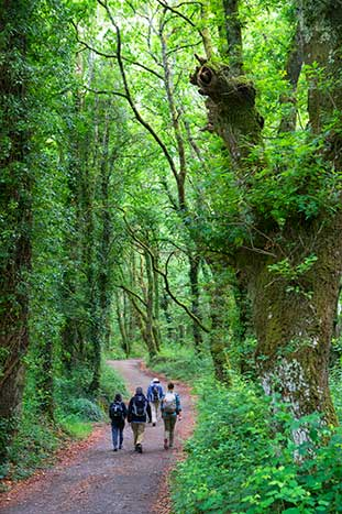 Camino de Santiago Family  Walking & Hiking Tour - Older Teens & 20s