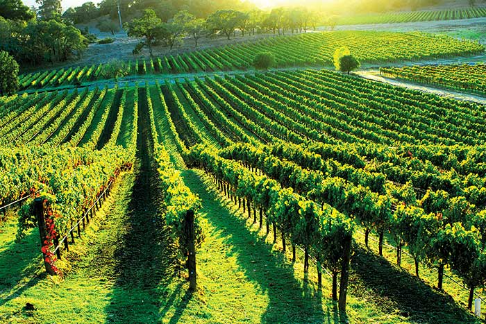 Sonoma County Pictures: View California wine country photos