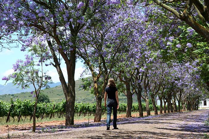 Wine Country Active Culinary Walking Tours