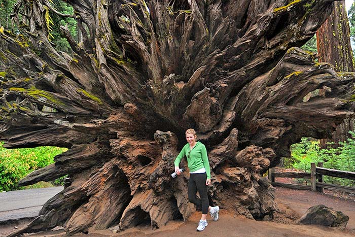 Giant Sequoia Tree - Yosemite Family Walking & Hiking Tour