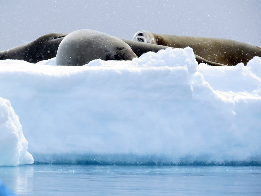 Antarctica Cruise MultiAdventure Tour Backroads - 12 things to see and do in antarctica
