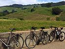 Vineyard and Bikes - Backroads California Wine Country Bike Tour