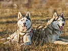 Dogsledding - Backroads Prince William Sound to Denali Multi-Adventure Tour