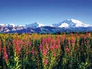 Backroads Prince William Sound to Denali Family Adventure Tour