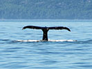 Whale watching - Quebec Family Tour