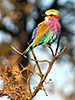 Bird - Backroads South Africa & Botswana Multi-Adventure Tours