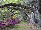 Tree - Backroads Charleston to Savannah Multi-Adventure Tour