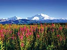 Denali National Park Walking & Hiking Tour