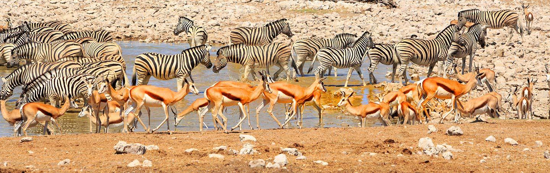 Watering Hole in Africa - Namibia & Zimbabwe Family Safari Walking Tour