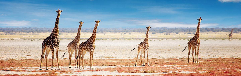 Giraffe - Namibia & Zimbabwe Family Safari Walking Tour