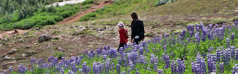 Hiking on Northern Iceland Family Walking & Hiking Tour