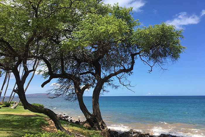 Maui Family Multi-Adventure Tour – Older Teens & 20s