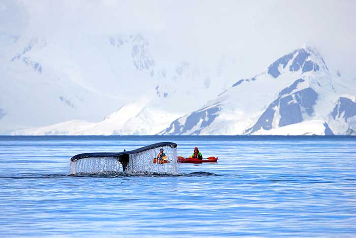 Kayaking on Backroads Antarctica Ocean Cruise Multi-Adventure Tour