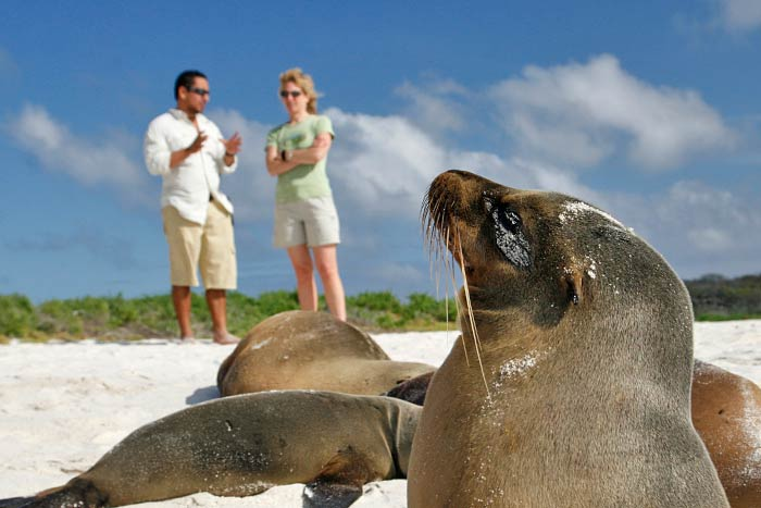 Seals - Galapagos Ocean Cruise Multi-Adventure Tour