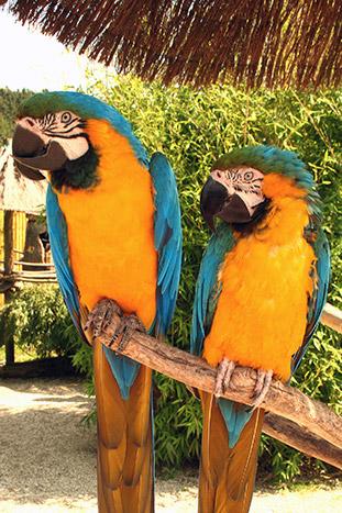 Birds - Costa Rica & Panama Ocean Cruise Family Multi-Adventure Tour