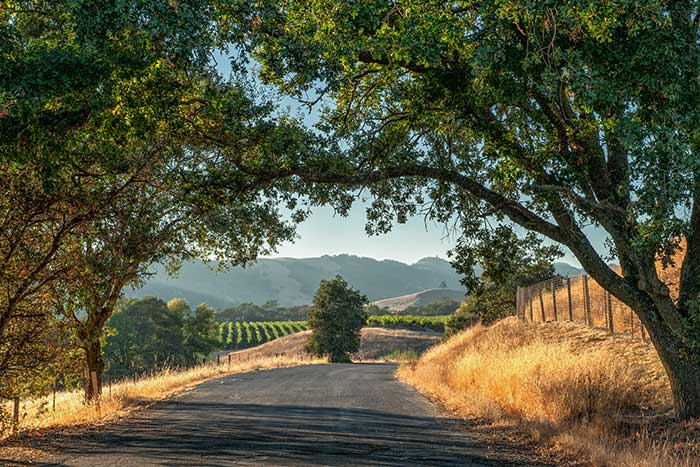 California Wine Country Family Bike Tour - 20s & Beyond | Backroads