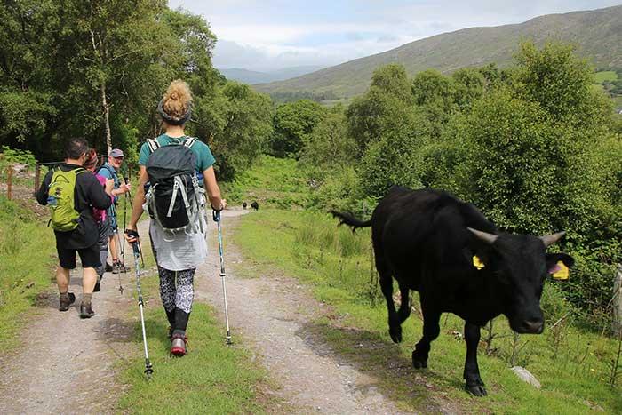 Ireland Family Multi-Adventure Tour - 20s & Beyond