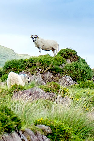 Biking - Ireland Family Multi-Adventure Tour - 20s & Beyond