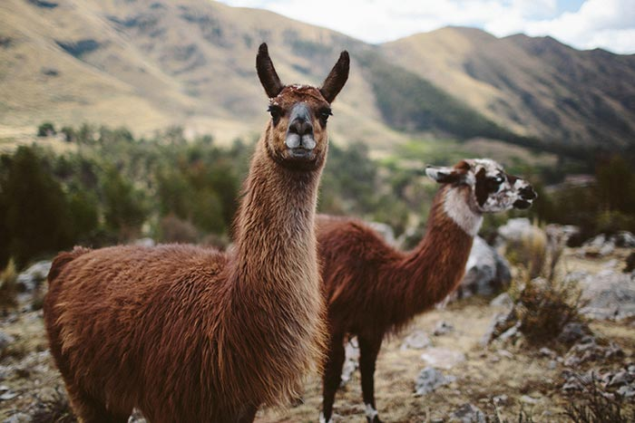 Peru Family Multi-Adventure Tour - 20s & Beyond | Backroads
