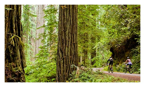 Redwood Empire Family Multisport Deluxe Camping Tours