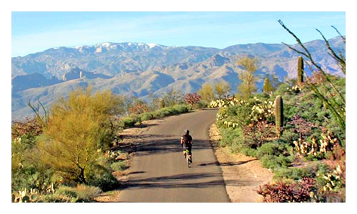Tucson and Sonoran Desert Bike Tour