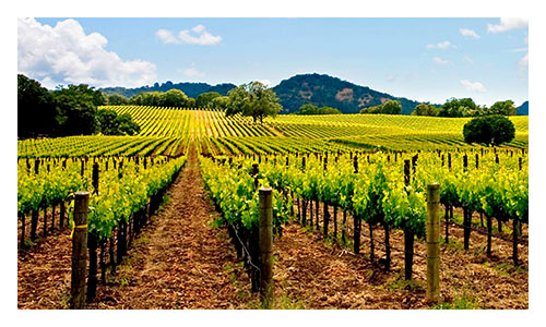 California Wine Country Bike Tours